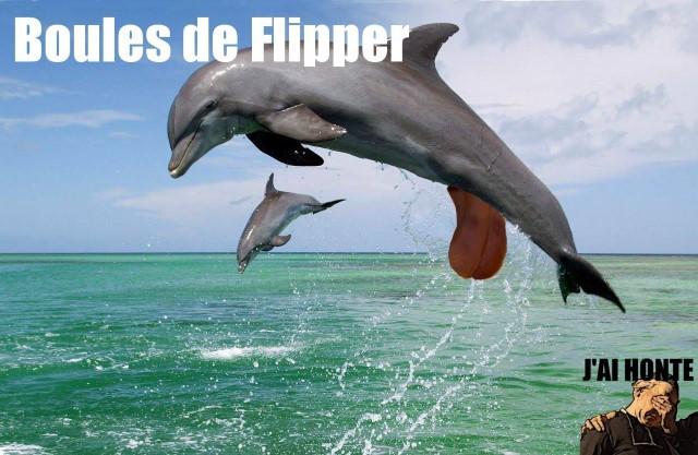 j-ai-honte-boules-de-flipper