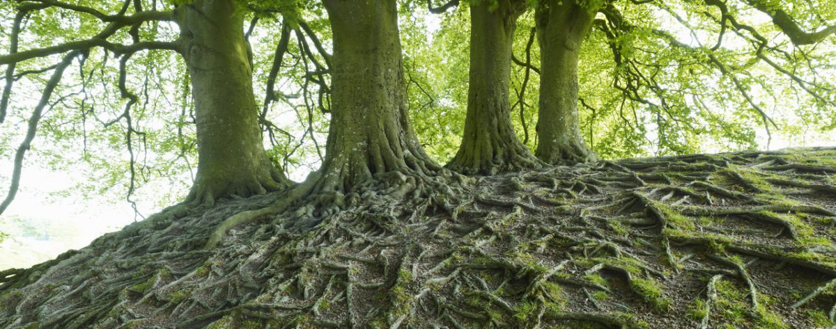 Comment les arbres discutent dans la forêt