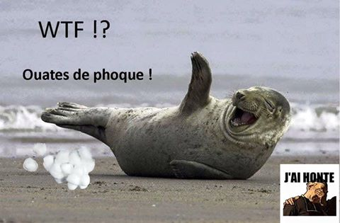 Ouates de phoque (J'ai honte)